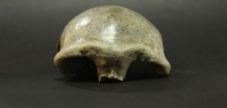 Монголоос олдсон эртний хүний гавлын ясыг судалжээ